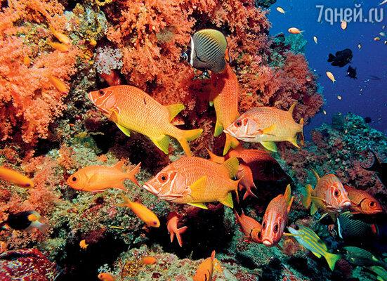 На Мальдивах обитает 900 видов только тропических рыб