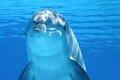 Морской странник — одинокий дельфин