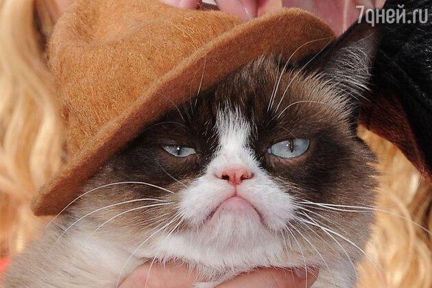 Grumpy cat на церемонии MTV Movie Awards-2014