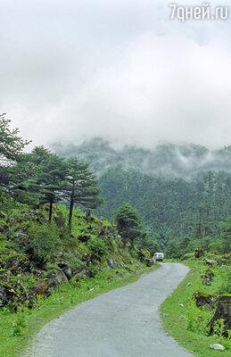 Сикким — настоящий ботанический рай. Благодаря разным климатическим условиям (от субтропического довысокогорного) в штате растет немало диковинных растений...