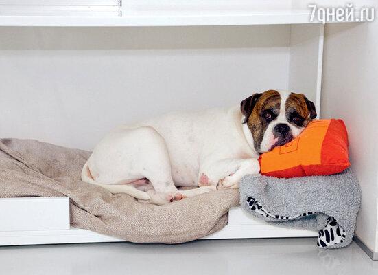 Постельное белье у псов меняется раз в неделю