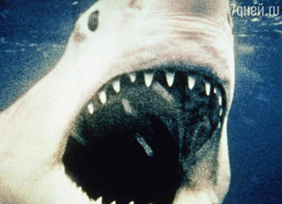 Первая из трех версий клыкастого монстра, созданных для фильма, предназначалась главным образом для подводных съемок. Она могла с достаточной скоростью двигаться вперед, находясь на буксире у катера