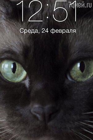 Та самая кошка