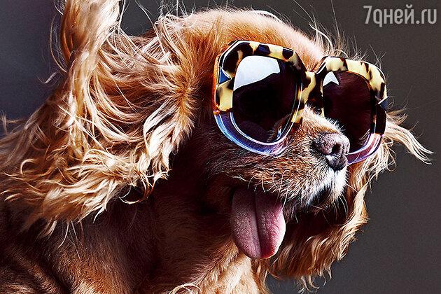 Знаменитый беззубый пес Тост снялся в рекламной кампании