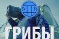 13 миллионов просмотров за 10 дней: клип группы «Грибы» порвал Интернет!