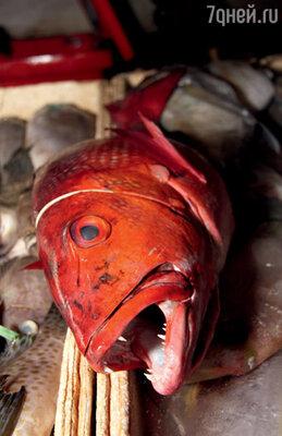 Красный снеппер особенно хорош запеченный на гриле
