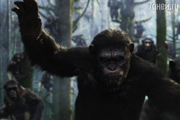 Сегодня в Сети появился первый англоязычный трейлер фантастического фильма «Планета обезьян: Революция»