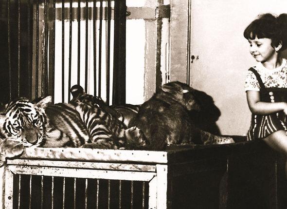 Моя дочь с детства была рядом с тиграми