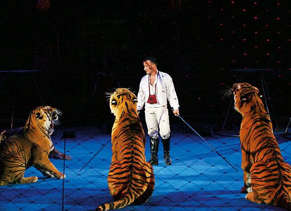 Мой сын, как и дочь, продолжил дело, которым я занимаюсь. Артур начал выступать с тиграми, когда ему еще 15 лет не было