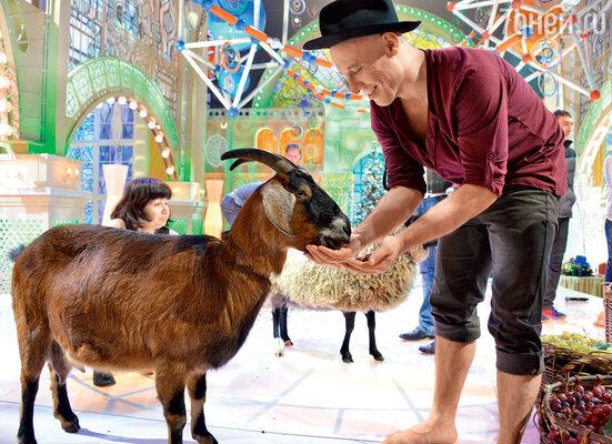 Денис Майданов в образе Адриано Челентано подкармливает козу, чтоб не воровала
