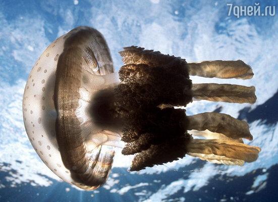 Соприкосновение с медузой можно сравнить с ожогом от утюга - боль, жжение, краснота и отек