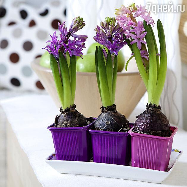 Украсьте дом цветами