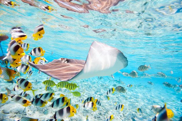 Таити рыбы