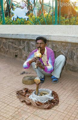 Заклинатель змей теперь редкость в Мумбаи. Это развлечение запрещено: змей жалко