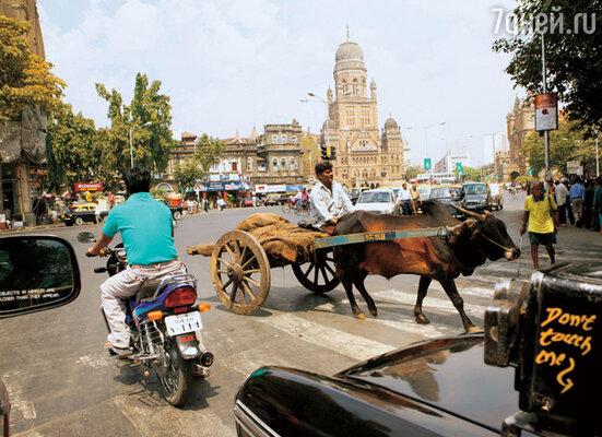 Мумбаи занимает лидирующее место по количеству ДТП в Индии. Оно и понятно — в таком трафике уцелеть сложно