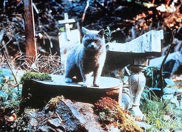 На пятом месте фильм «Кладбище домашних животных», который уже давно является визитной карточкой творчества Кинга