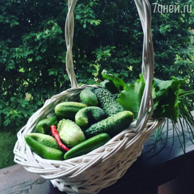 Урожай Екатерины Климовой