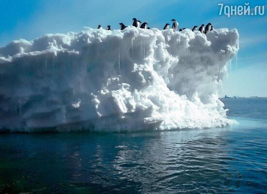 Сторожат место заточения злых сил, согласно преданию, ангельские души, воплощенные в нелетающих птиц. Кто это, если не пингвины?