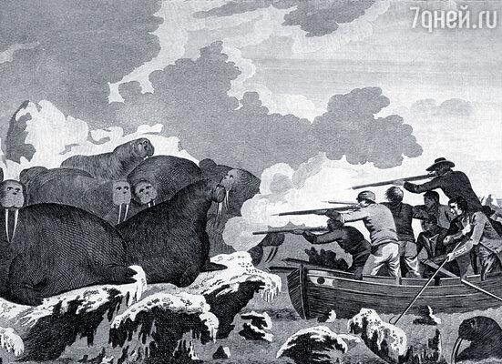 Как известно, мореплавателя убили гавайские аборигены. Плыл бы другим путем, глядишь, еще долго исследовал бы новые земли. Джеймс Кук с экипажем охотятся на моржей