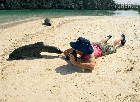 Морские котики — самые дружелюбные обитатели островов