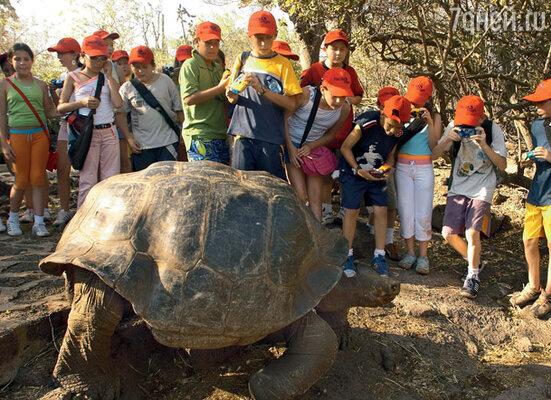 Гигантские сухопутные черепахи, давшие название островам