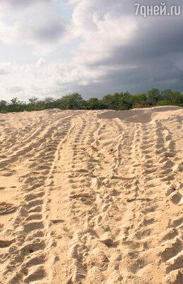 Эти следы на пляже, похожие на колею, проложенную танком, оставили морские черепахи. «Чудовища» по ночам выходят из моря на сушу