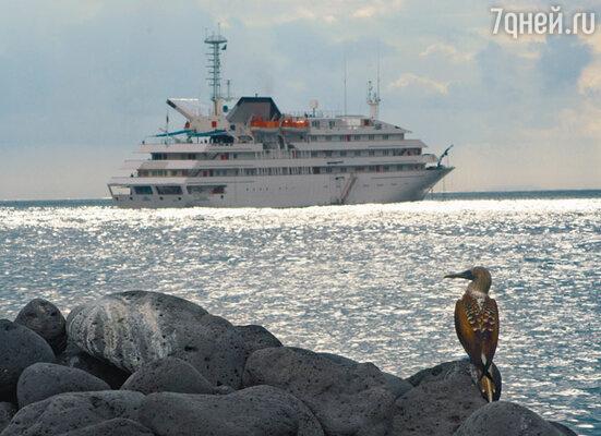 Уникальный дикий животный мир Галапагосов — главная приманка для туристов, не жалеющих времени и денег для посещения этого райского уголка