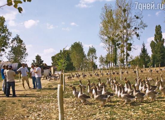 Гусиная ферма в Перигё