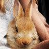 Кролик Кары Делевинь — Сесил пользуется среди любителей живности особой популярностью. Модель берет кролика с собой на кастинги.