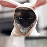 У Диты фон Тиз дома живет кот Алистер, редкой породы девон-рекс. У животного кудрявая шерсть и забавные широко расставленные глаза.