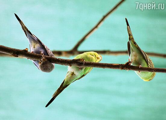 «Оранжерея дивных птичек» на ВВЦ