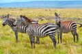 Прекрасная Кения: акуна матата!