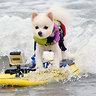 Собаки-серферы