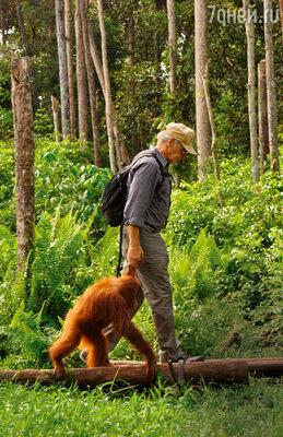 Актер собирает материал для своего документального фильма о защите природы. В заповеднике дляорангутангов наострове Борнео, сентябрь 2013 г.