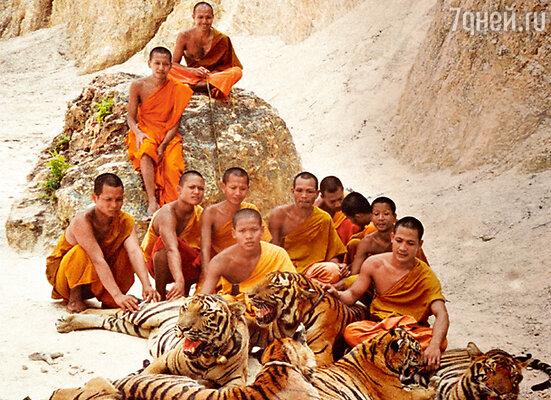 На территории храма сегодня живут тридцать четыре тигра