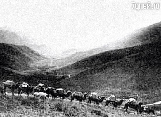 За Пржевальским шел караван верблюдов, навьюченных шкурами и скелетами невиданных животных