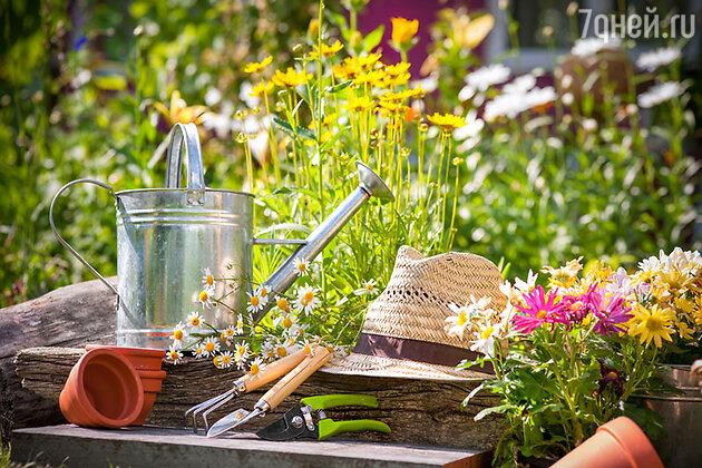 Многие садоводы-дачники уже всерьез подготовились к предстоящему летнему сезону