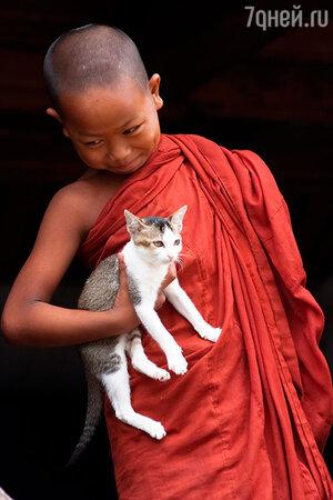Монастырь летающих кошек