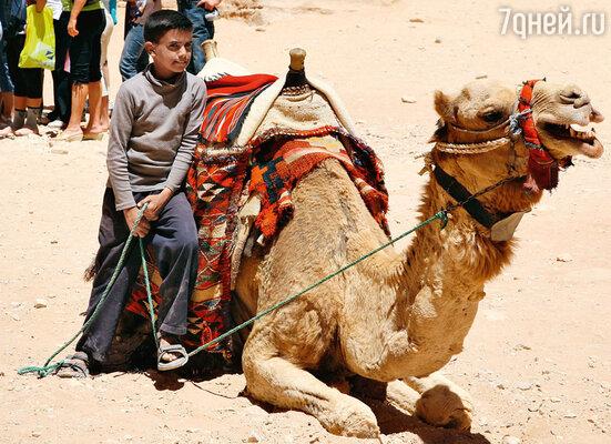 Как и две тысячи лет назад, верблюды — основное транспортное средство в древнем городе