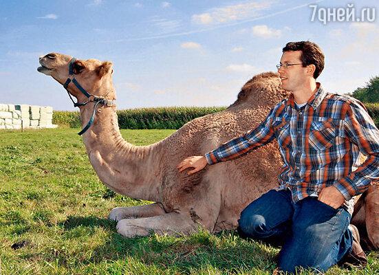 Взявшись за выпуск верблюжьего молока, Фрэнк Смитс и не предполагал, с какими трудностями ему придется столкнуться