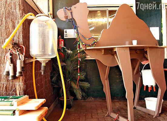 В одном из помещений фермы Фрэнк установил этот макет, чтобы все желающие могли увидеть, каким образом происходит доение верблюдиц