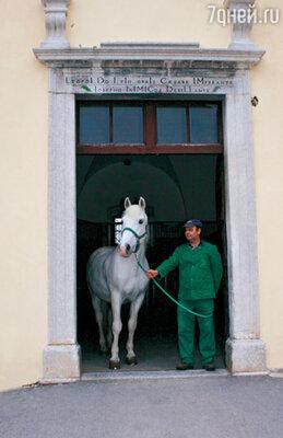 Вход в конюшню, построенную при  императоре Леопольде I