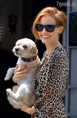 «Горжусь тем, что спасла много несчастных собак. Кстати, свою любимицу Чаплин с тремя лапками я тоже подобрала наулице»