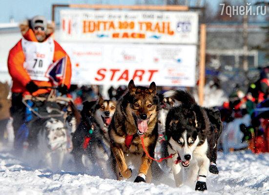 «Айдитарод» — ежегодные гонки на собачьих упряжках — проводятся в марте