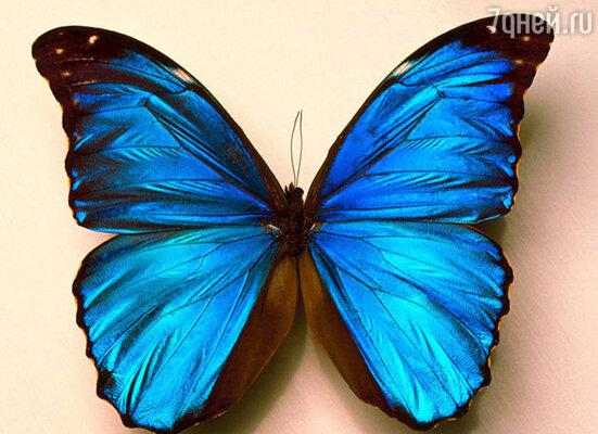 Музей бабочек на ВДНХ