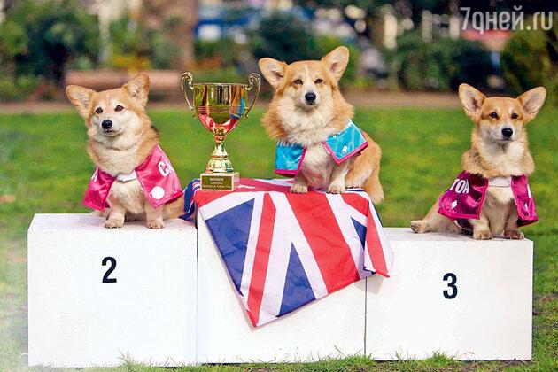 «Королевские» собачьи бега выиграла собачка по имени Александра