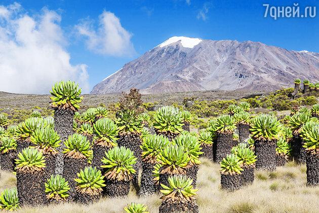 Растительность Килиманджаро