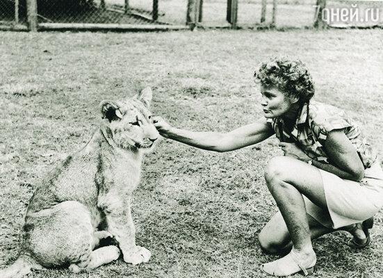 Джой назвала приемыша Эльсой. К людям львица относилась очень дружелюбно, а Джой и Джорджа вообще считала своими родителями