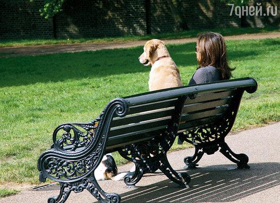 В отличие от людей, собакам есть доступ не во все парки, но уж если войти разрешили, то и на лавке посидеть позволят