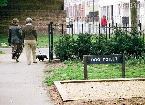 Даже собачки послушно делают свои дела в строго отведенных для этого местах